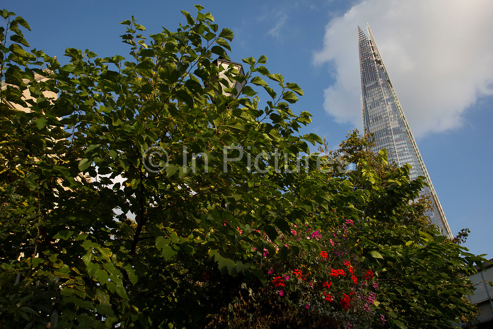 The Shard rising up above flowers and trees in Southwark, London, UK. The Shard, also referred to as the Shard of Glass, Shard London Bridge and formerly London Bridge Tower, is an 87-storey skyscraper in London that forms part of the London Bridge Quarter development.