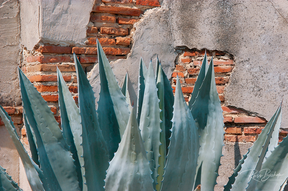 Agave and brick wall, Mission San Miguel Archangel (16th Mission-founded 1797), San Miguel, California