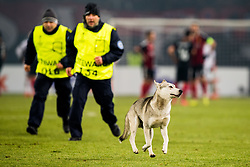 December 7, 2017 - Skopje, MACEDONIA - 171207 A street dog is being chased off the pitch by guards during the Europa League match between FK Vardar and Rosenborg on December 7, 2017 in Skopje..Photo: Jon Olav Nesvold / BILDBYRN / kod JE / 160096 (Credit Image: © Jon Olav Nesvold/Bildbyran via ZUMA Wire)