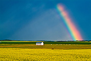 rainbow and barn and canola after storm<br />Mariapolis<br />Manitoba<br />Canada
