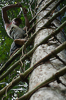 Men construct a canopy giant ladder and canopy platform from poles and vines.