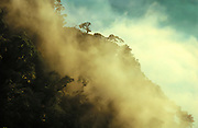 Rain forest, Mt. Kinabalu National Park, Borneo, Malaysia