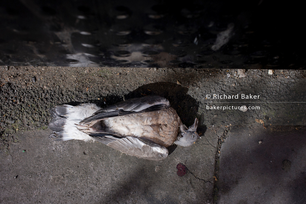 Aerial detail of a dead pigeon, seemingly in a peraceful sleep in a City of London street.