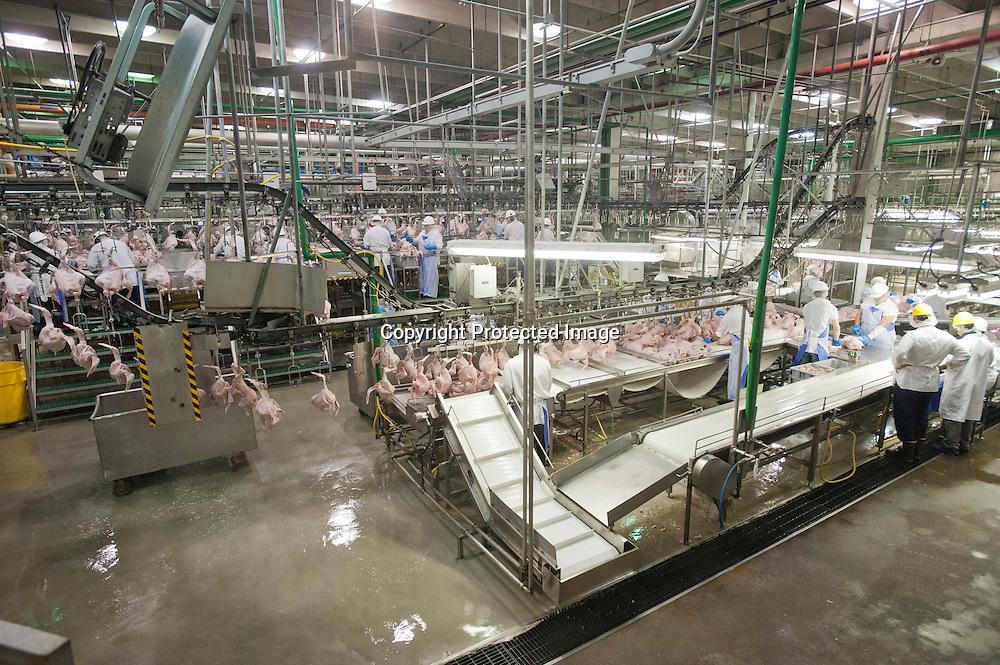 A butterball turkey plant in Ozark, Arkansas and a turkey farm in Scranton, Arkansas.