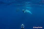 Bryde's whale, Balaenoptera brydei or Balaenoptera edeni, opens mouth to feed on baitball of sardines, off Baja California, Mexico ( Eastern Pacific Ocean ); photographer Brandon Cole at bottom of frame #2 in sequence of 6; MR 399