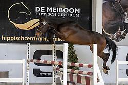 014, Weltmeyer Drum vh Juxschot<br /> Hengstenkeuring Brp- Azelhof - Lier  2021<br /> © Hippo Foto - Dirk Caremans<br /> 14/04/2021