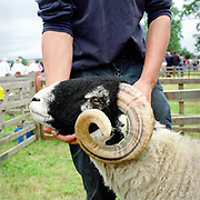 A North York Moors hill farmer shows his Swaledale tup (ram) at Farndale Show, North Yorkshire, UK