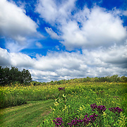 Midwestern prairie trail in late summer under partly cloudy skies, with late summer wildflowers.  Purple ironweed featured in foreground.