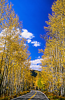 Fall foliage, Independence Pass, Colorado USA
