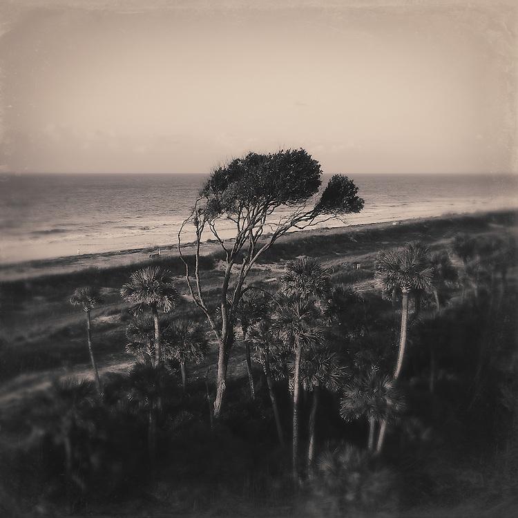 The ocean breezes have shaped the trees on Hilton Head Island, South Carolina.