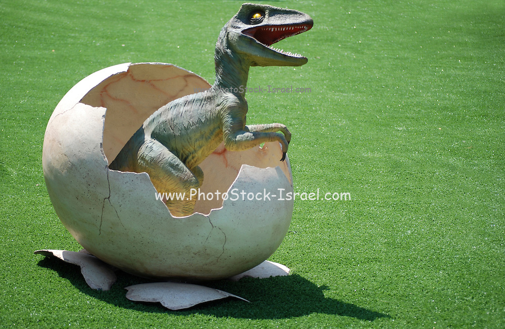 Young Velociraptor hatches from an egg