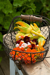 Wire basket filled with edible flowers. Nasturtiums, peas, squash