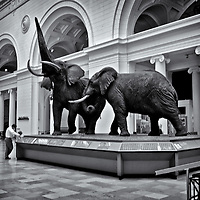Natural History Museum<br />editted, converted to B&W 2/16/15