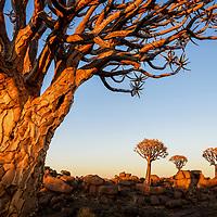 Namibia: South (2019)