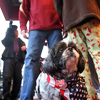 (01/20/10-Boston,MA) US Senator-elect Scott Brown appears outside the Park Plaza Hotel early this morning where he prepared to say goodbye to his daughter Arianna Here, his dog Snuggles is seen with Scott. Photo by Mark Garfinkel