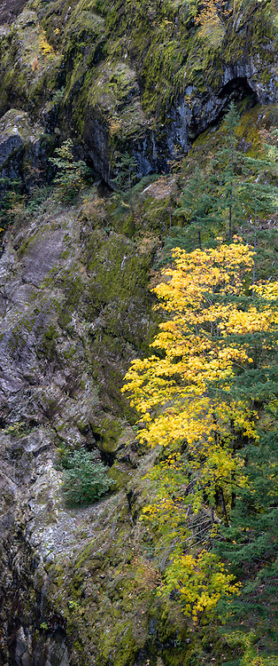 Fall Foliage near Gorge Creek Falls in North Cascades National Park, Washington State, USA