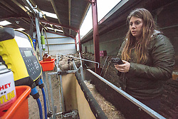 Anna with Kate Roswell at Hundleshope farm. Story on the farm in Peebleshire about the current state of women in farming. Checking the sheep's electronic tab.
