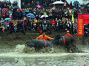 JINHUA, CHINA - NOVEMBER 17: (CHINA OUT) <br /> <br />  Bull Fighting To Pray For Harvest<br /> <br /> Villagers and visitors crowd to watch as two bulls fight during a praying for harvest activity in Wuyi County on November 17, 2015 in Jinhua, Zhejiang Province of China. Villagers held temple fair to pray for harvest in 2016.<br /> ©Exclusivepix Media