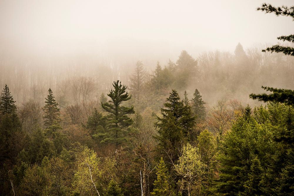 A foggy day in the Hiawatha National Forest near Munising, Michigan.