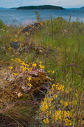 Wildflowers, Yellow Island, San Juan Islands, Washington, US
