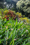 Densley planted Heliconia psittacorum and Cordiaeum variegata in the Tower Garden, St. Paul's, Grenada, the Caribbean, West Indies