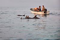 Tanzanie, archipel de Zanzibar, île de Unguja (Zanzibar), village de Kizimkazi, dauphin  // Tanzania, Zanzibar island, Unguja, Kizimkazi, dolphin