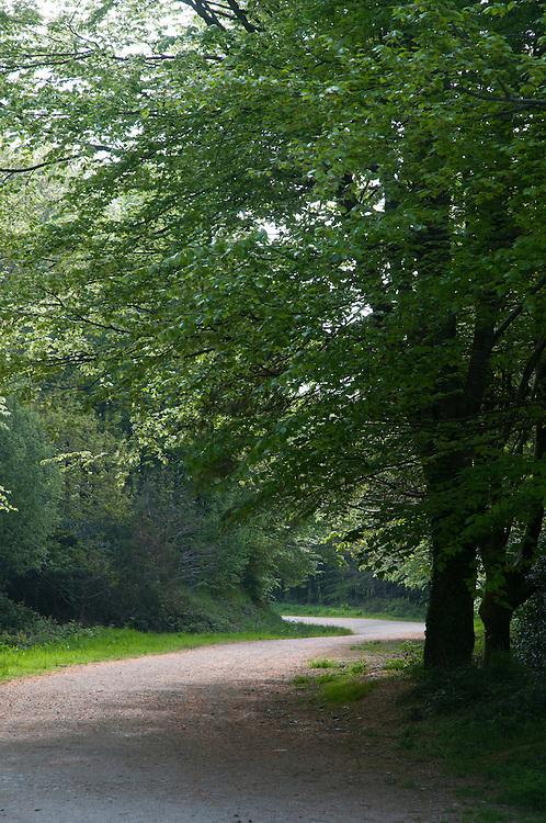 Idless Woods