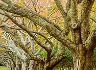 Cherry Trees, Further Lane, East  Hamptons, NY