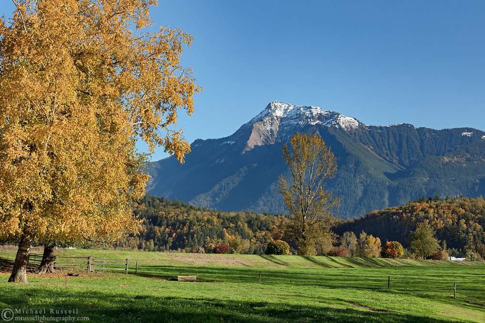 A fall day in the farmland along the Fraser River in Agassiz, British Columbia, Canada. This spot offered a great view of Mount Cheam as well as the fall foliage provided by the two Paper Birch (Betula papyrifera) on the left.