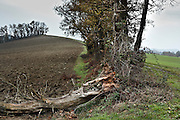 old dead tree with rotted root fallen over in rural landscape France Languedoc