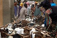 BURKINA FASO, Gorom-Gorom, 2007. Tuareg, Bella and Hausa traders await new stock at Gorom-Gorom's Thursday animal market, which serves the whole region.
