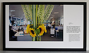 Yellow sunflowers brighten up drab offices of an auditing company at their London headquarters.<br />