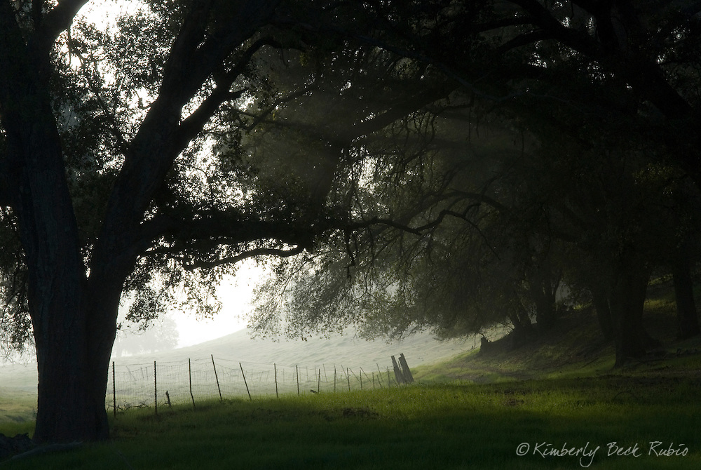 Misty morning in Paso Robles, Central California Wine Country.