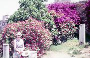 Woman sitting by bougainvillea plants in flower, Kos, Greece 1970s