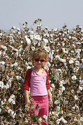 A young four year old girl in a cotton field