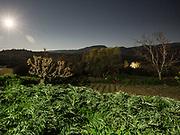 Artichoke plants under full moon. At the house of Thomas Venakis, in Zouridi village.