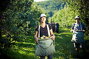 Vinaigrerie Gingras Vinegar farmers at work in the fields and in the cellar Working environments