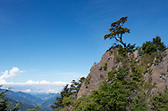 A lonesome tree grows in the clean, crisp air high above Taiwan.