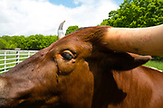 View of a bull's eye at The Farm, Door County, Wisconsin