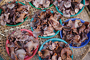 Mouse ear mushrooms for sale displayed on colourful plastic bowls at Khua Din morning market in Vientiane city, Lao PDR. A large variety of local products are available for sale in fresh markets all over Laos, all being sold on small individual stalls. Talat Khua Din is a traditional Lao market close to Vientiane city centre and is currently under threat from the construction of a shopping mall.