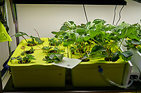 Hydroponic Tub 01 (Left) Tub 02 (Right). Day 28 L01-L06 Strawberry Runners from outside Grow Towers; R01-R06 Sweet Charlie Strawberry Plugs (ISONS). Image taken with a Leica TL-2 camera and 35 mm f/1/4 lens (ISO 250, 35 mm, f/8, 1/50 sec).