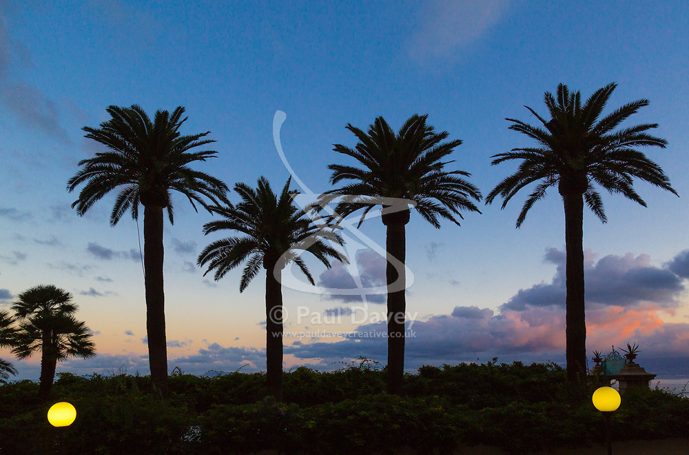 Sorrento, Italy, September 15 2017. Palm trees make a silhouette against the dawn sky in Sorrento, Italy. © Paul Davey
