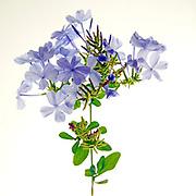 Blue flower Artistic macro