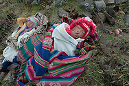 "Ursula and Julito are the new entry of   family Huanca, one of many who live in the various ""comunidades campesinas"" that compose  the Potato Park. A Park site in the upper area of ??Pisac, at the entrance of the Sacred Valley of the Incas. How in the Andean world the children are dependent mothers h24. While the mother is picking potatoes in a field they own two children, wrapped in blankets from the traditional design, they are falling asleep. / PERU"