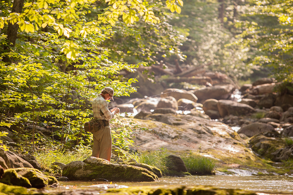 Fly fishing for brook trout early spring in Virginia.
