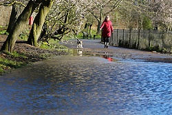 © Licensed to London News Pictures. 17/02/2020. London, UK. A woman with a dog in Clissold Park, north London which is flooded by heavy rain from Storm Dennis. Photo credit: Dinendra Haria/LNP