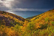 Acadian forest in autumn foliage along the Cabot Strait at Cape Smokey <br />Cape Breton Highlands National Park<br />Nova Scotia<br />Canada