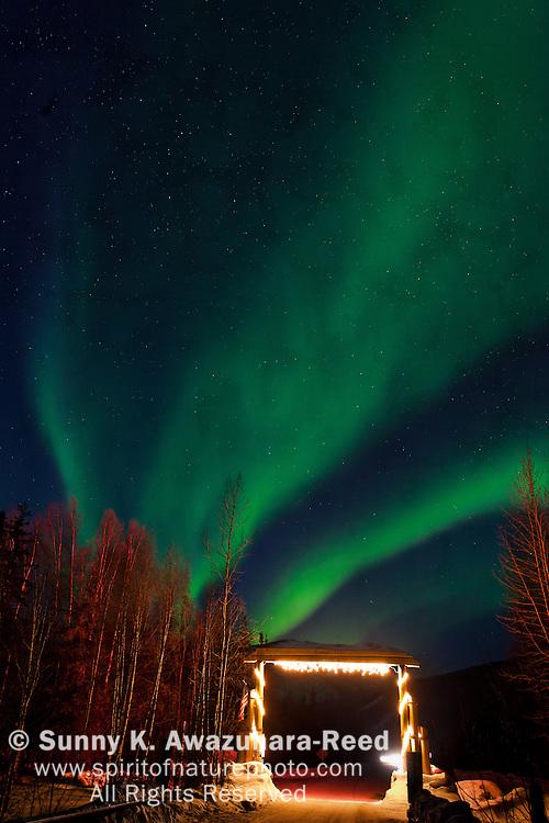 The neon green aurora fills the sky above the gate of Chena Hot Springs Resort, Fairbanks, Interior Alaska, winter.
