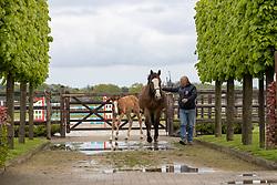 Block Peter, Katrien, Jasper, Rezna HWS, Vandoles HWS<br /> Horse World Stables - Essen 2021<br /> © Hippo Foto - Dirk Caremans<br /> 15/05/2021