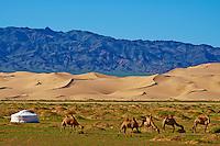 Mongolie, Province d'Omnogov, parc national du Gobi, desert de Gobi, dunes de Khongoryn Els, campement nomade // Mongolia, Omnogov province, National Park of Gobi, Gobi desert, Khongoryn Els dunes, nomad camp